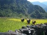 Nepal 2008 2 608