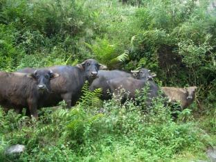 Nepal 2008 183