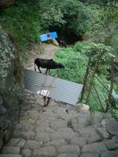 Nepal 2008 201