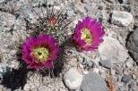 Pretty cactus flower!